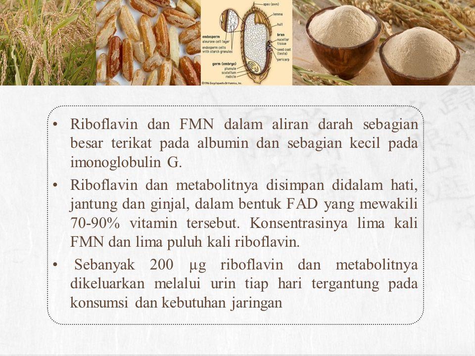 Riboflavin dan FMN dalam aliran darah sebagian besar terikat pada albumin dan sebagian kecil pada imonoglobulin G.