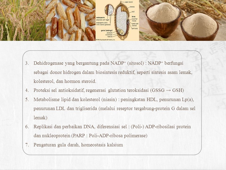 Dehidrogenase yang bergantung pada NADP+ (sitosol) : NADP+ berfungsi sebagai donor hidrogen dalam biosintesis reduktif, seperti sintesis asam lemak, kolesterol, dan hormon steroid.