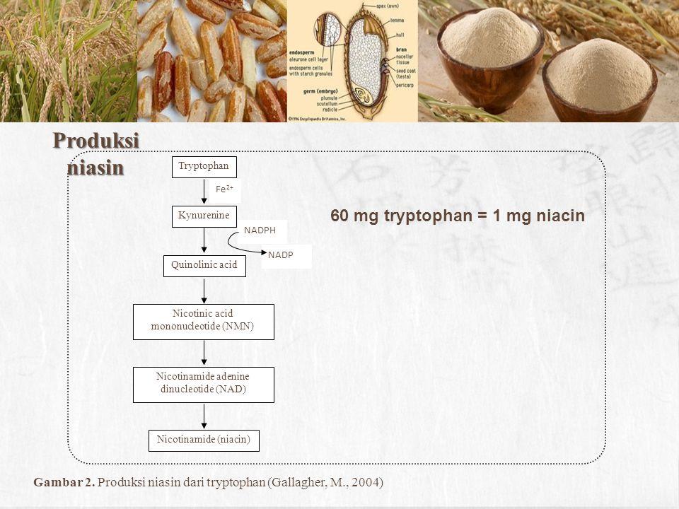 Produksi niasin 60 mg tryptophan = 1 mg niacin