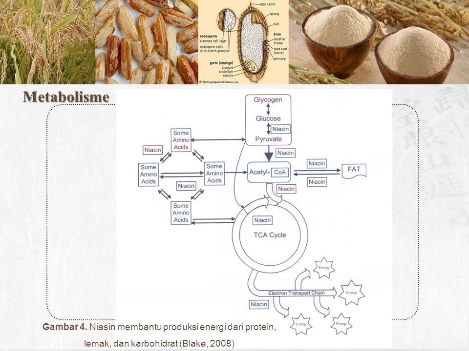 Metabolisme Gambar 4.