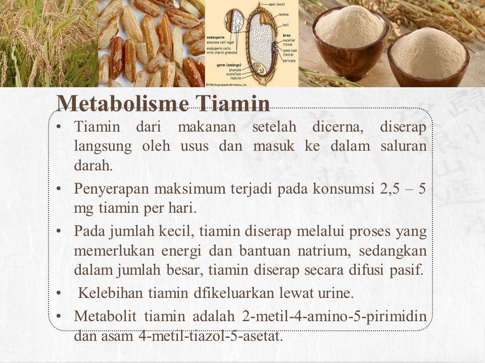 Metabolisme Tiamin Tiamin dari makanan setelah dicerna, diserap langsung oleh usus dan masuk ke dalam saluran darah.