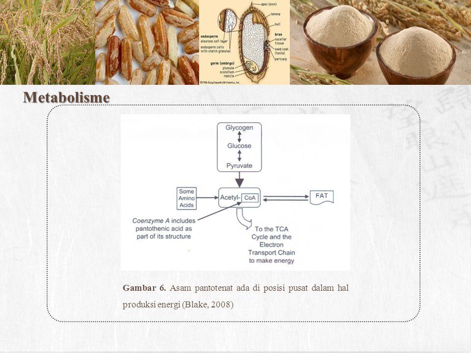 Metabolisme Gambar 6. Asam pantotenat ada di posisi pusat dalam hal produksi energi (Blake, 2008)
