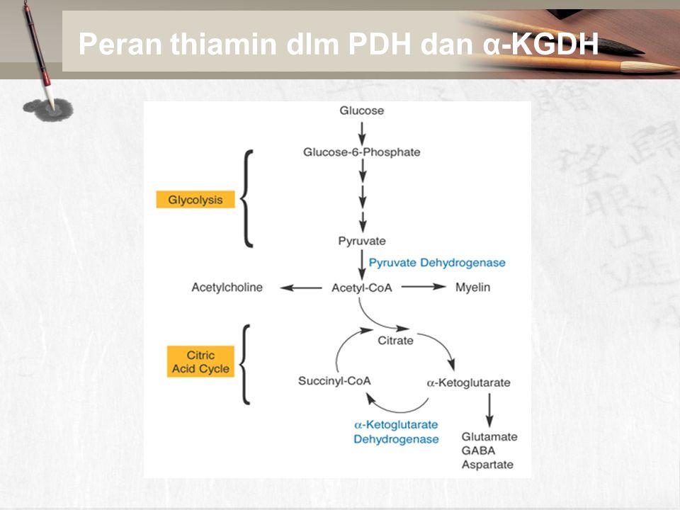 Peran thiamin dlm PDH dan α-KGDH