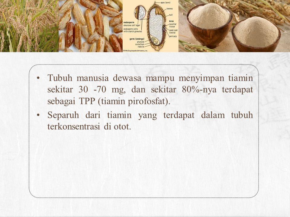 Tubuh manusia dewasa mampu menyimpan tiamin sekitar 30 -70 mg, dan sekitar 80%-nya terdapat sebagai TPP (tiamin pirofosfat).