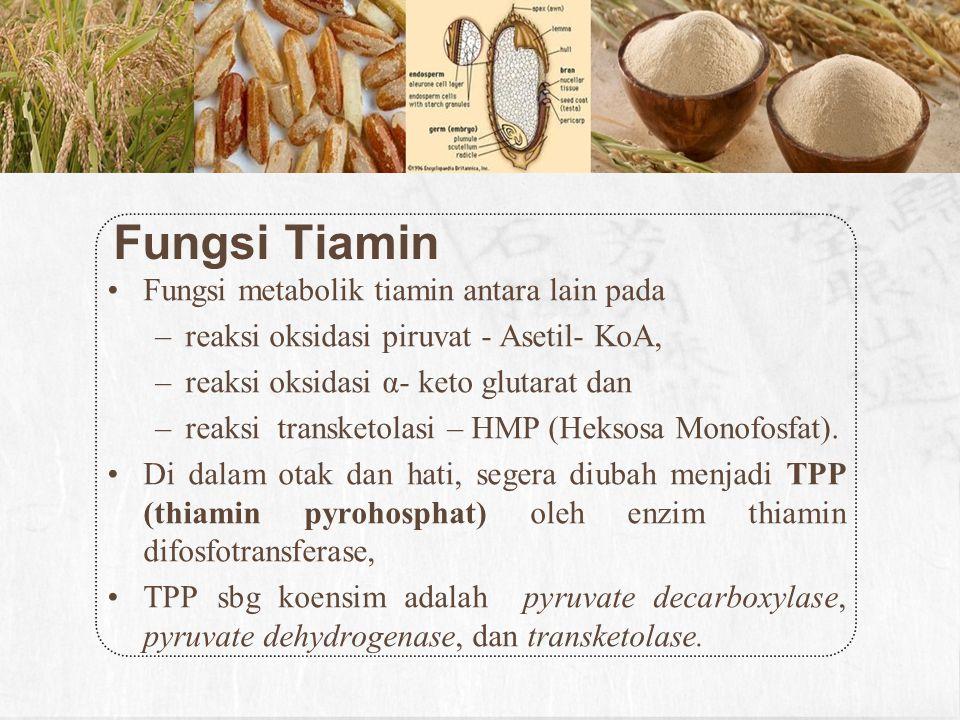 Fungsi Tiamin Fungsi metabolik tiamin antara lain pada