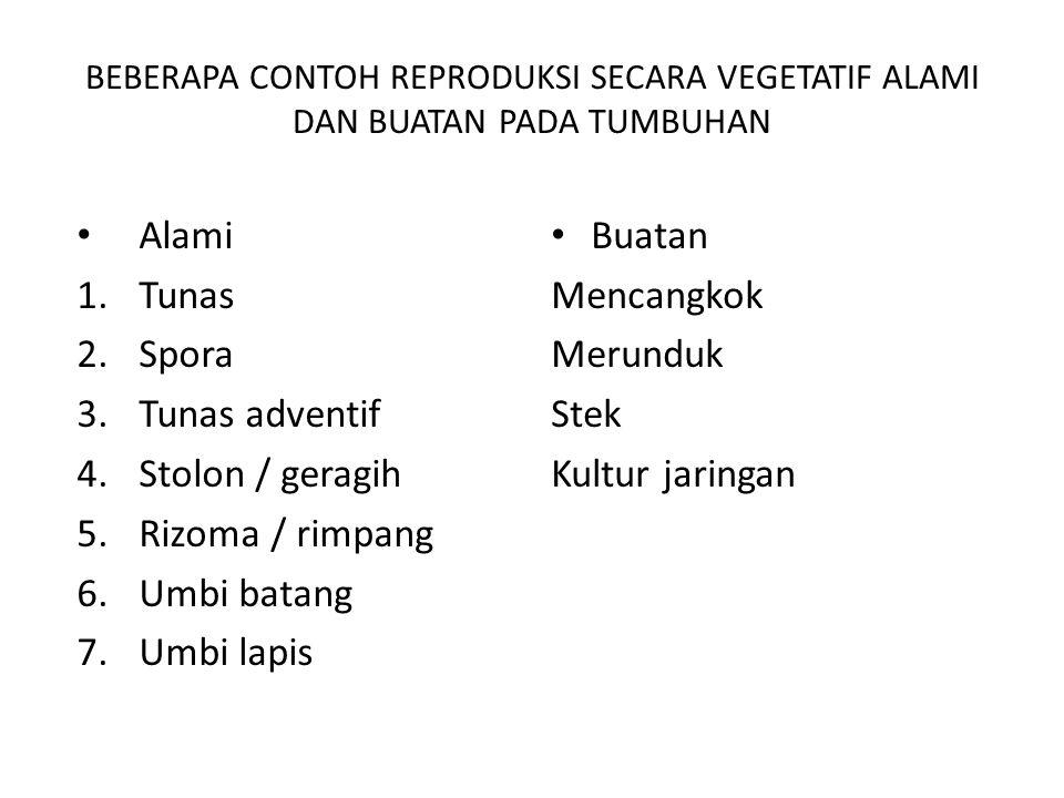 Alami Tunas Spora Tunas adventif Stolon / geragih Rizoma / rimpang