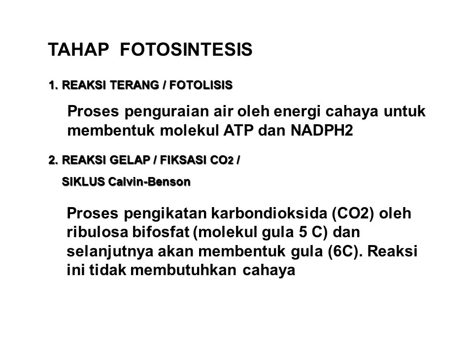TAHAP FOTOSINTESIS 1. REAKSI TERANG / FOTOLISIS. Proses penguraian air oleh energi cahaya untuk membentuk molekul ATP dan NADPH2.