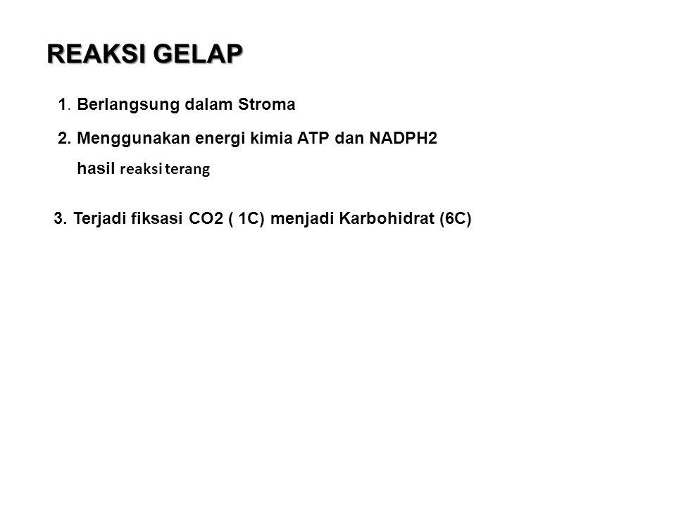 REAKSI GELAP 1. Berlangsung dalam Stroma