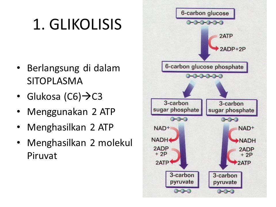 1. GLIKOLISIS Berlangsung di dalam SITOPLASMA Glukosa (C6)C3