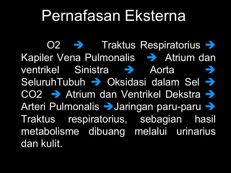 Pernafasan Eksterna