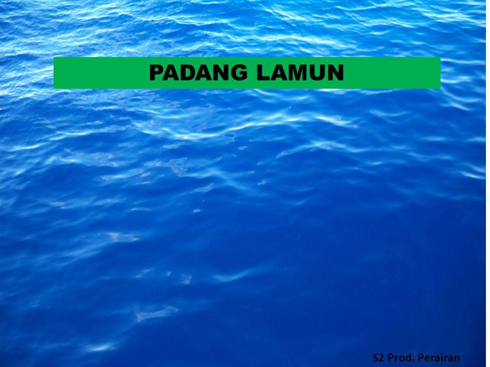 PADANG LAMUN S2 Prod. Perairan