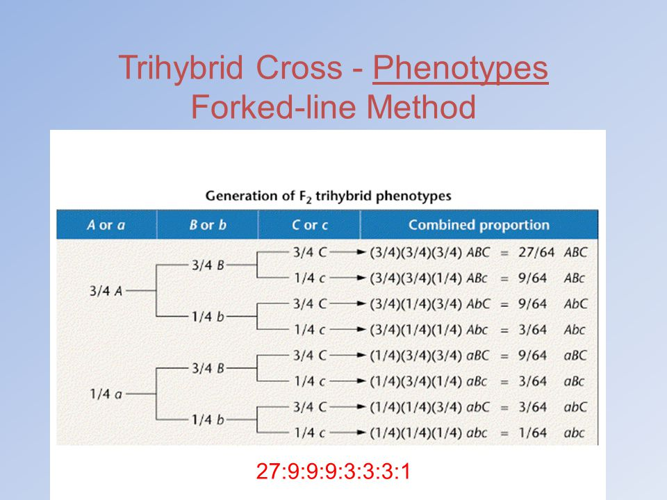 Trihybrid Cross - Phenotypes Forked-line Method