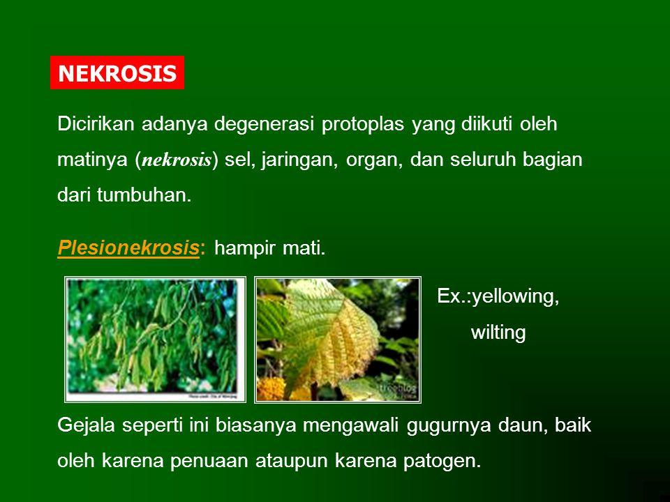 NEKROSIS Dicirikan adanya degenerasi protoplas yang diikuti oleh matinya (nekrosis) sel, jaringan, organ, dan seluruh bagian dari tumbuhan.