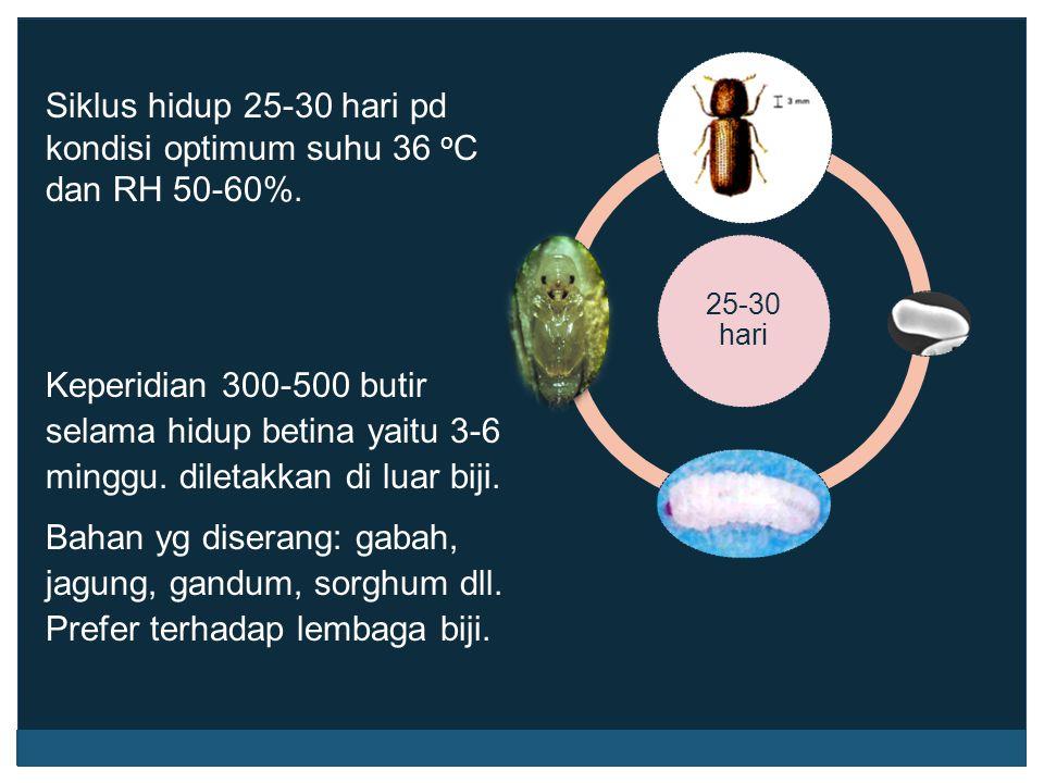 Siklus hidup 25-30 hari pd kondisi optimum suhu 36 oC dan RH 50-60%.