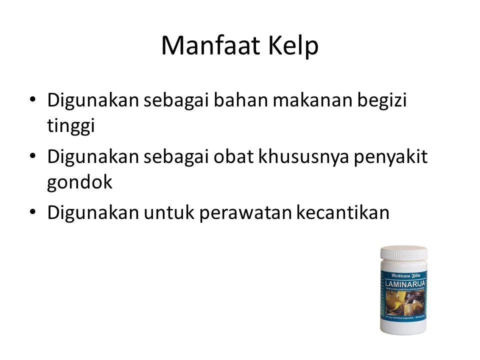 Manfaat Kelp Digunakan sebagai bahan makanan begizi tinggi