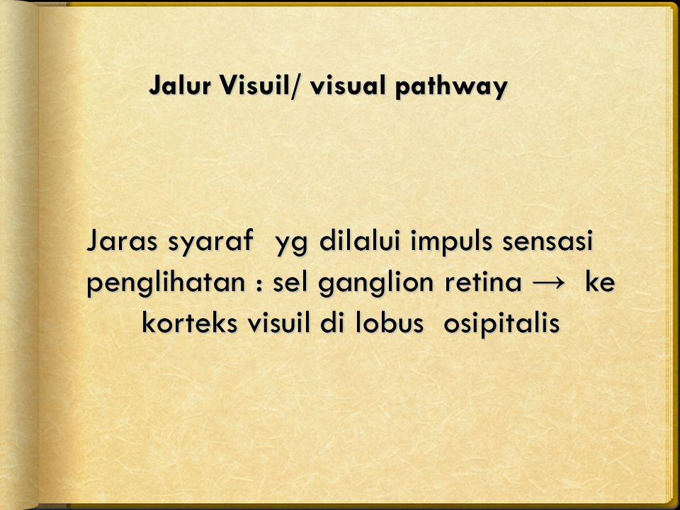 Jalur Visuil/ visual pathway