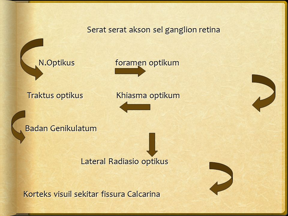 Serat serat akson sel ganglion retina