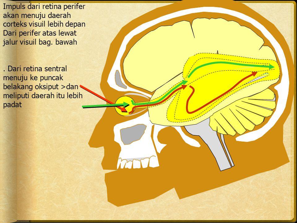 Impuls dari retina perifer akan menuju daerah corteks visuil lebih depan Dari perifer atas lewat jalur visuil bag. bawah