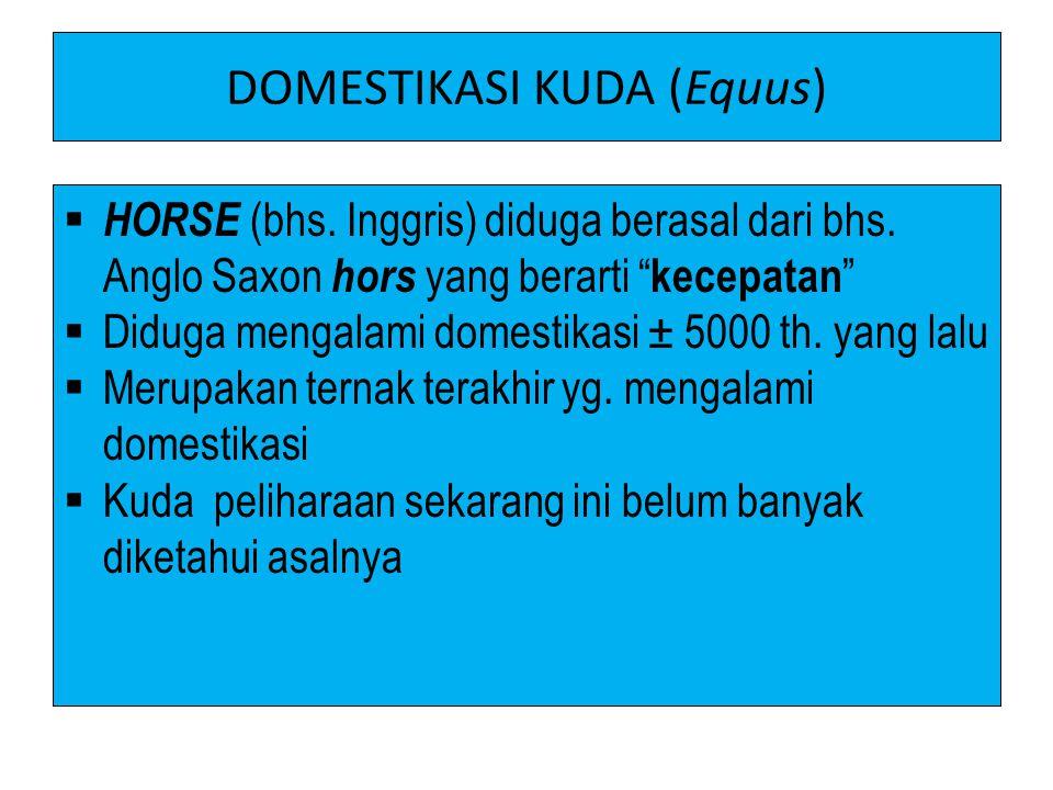 DOMESTIKASI KUDA (Equus)