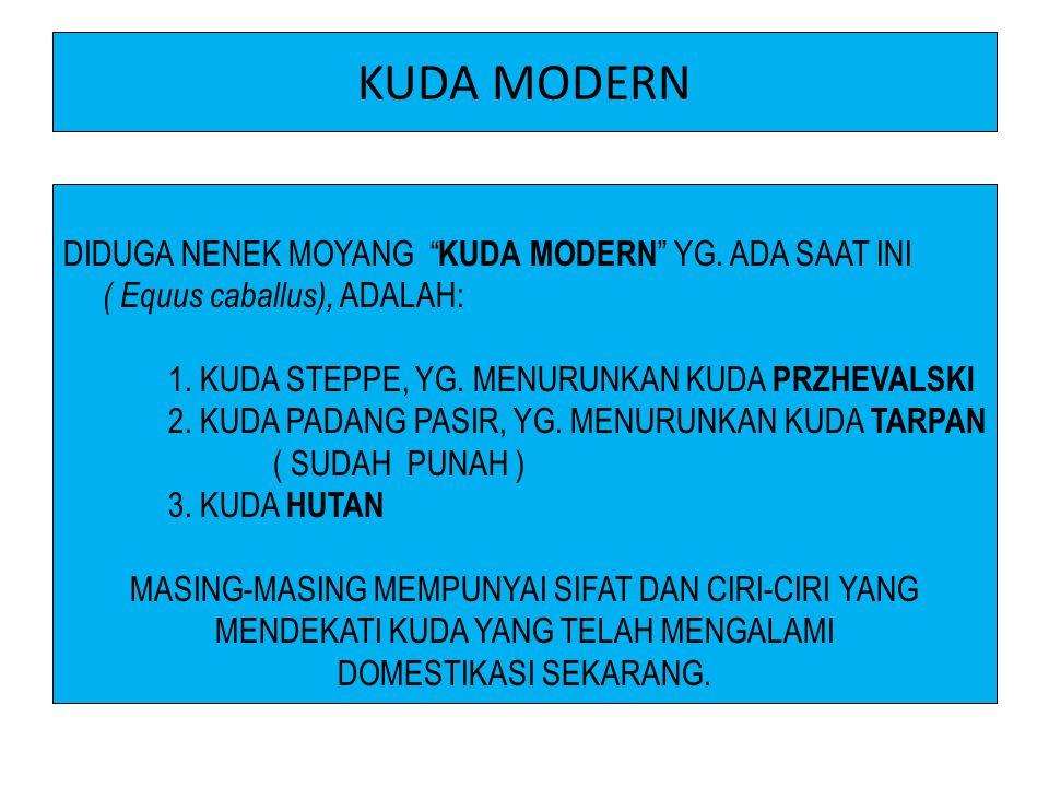 KUDA MODERN