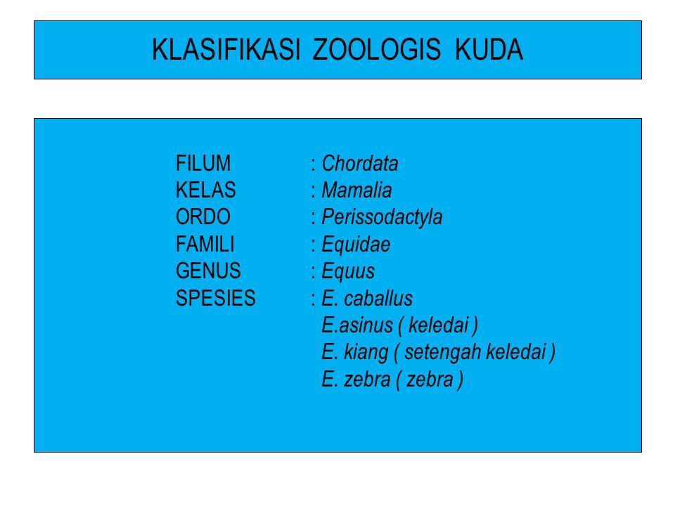 KLASIFIKASI ZOOLOGIS KUDA