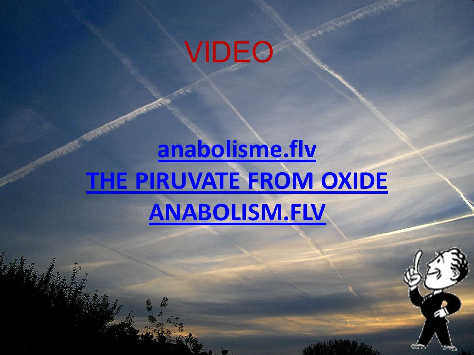 anabolisme.flv THE PIRUVATE FROM OXIDE ANABOLISM.FLV