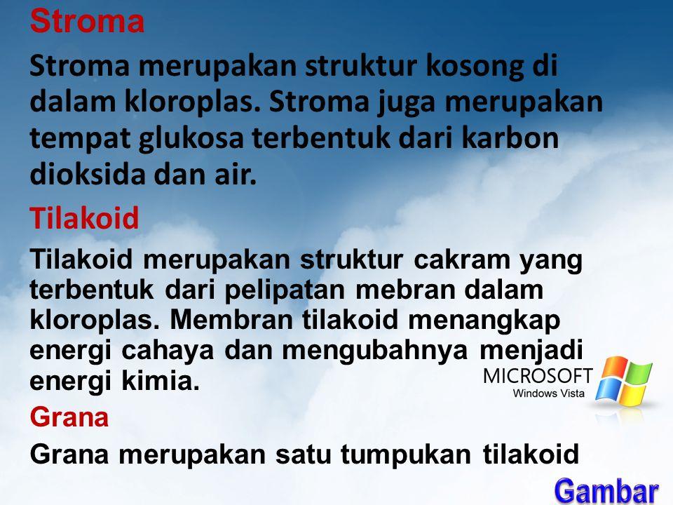 Stroma Stroma merupakan struktur kosong di dalam kloroplas. Stroma juga merupakan tempat glukosa terbentuk dari karbon dioksida dan air.