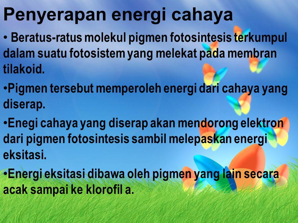 Penyerapan energi cahaya
