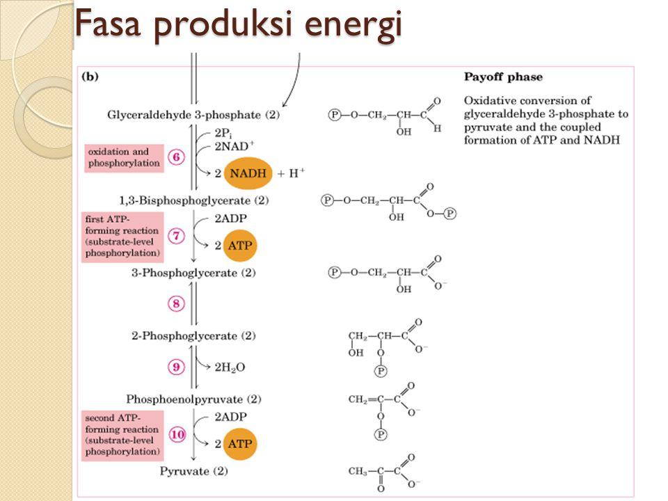 Fasa produksi energi