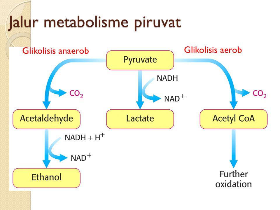 Jalur metabolisme piruvat