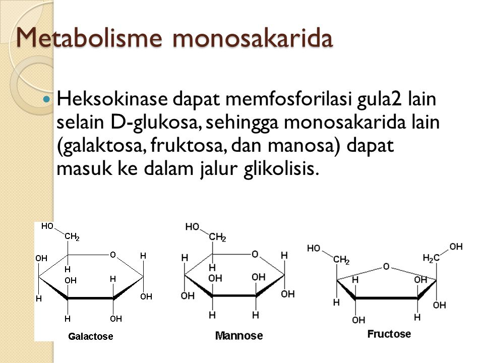 Metabolisme monosakarida
