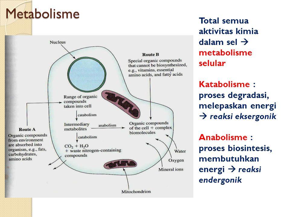 Metabolisme Total semua aktivitas kimia dalam sel  metabolisme selular. Katabolisme : proses degradasi, melepaskan energi  reaksi eksergonik.