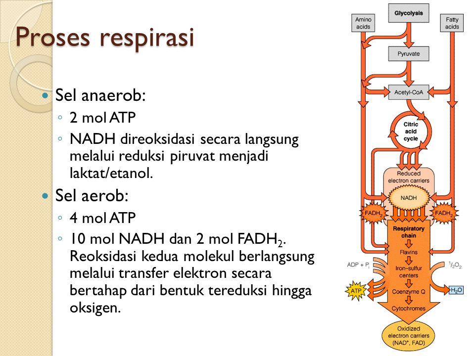Proses respirasi Sel anaerob: Sel aerob: 2 mol ATP