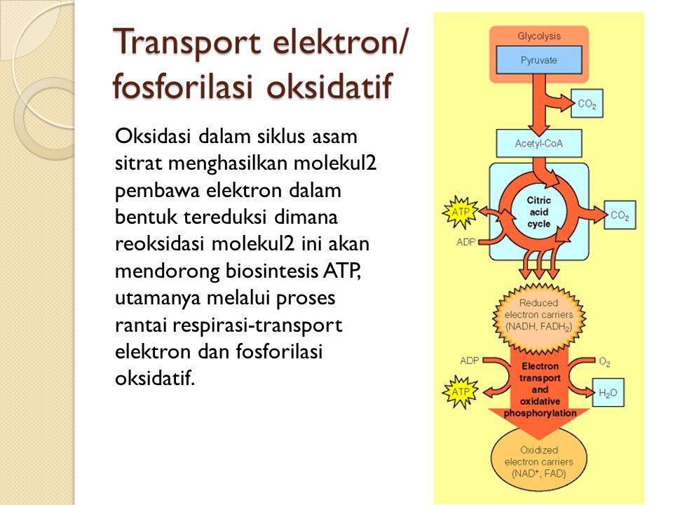 Transport elektron/ fosforilasi oksidatif