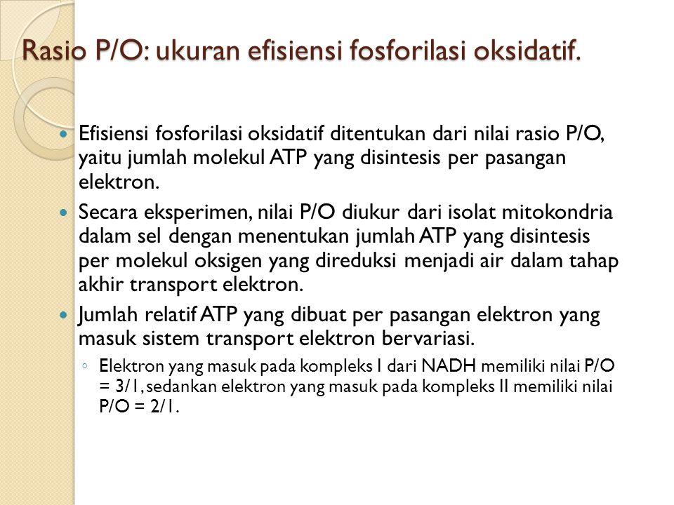 Rasio P/O: ukuran efisiensi fosforilasi oksidatif.