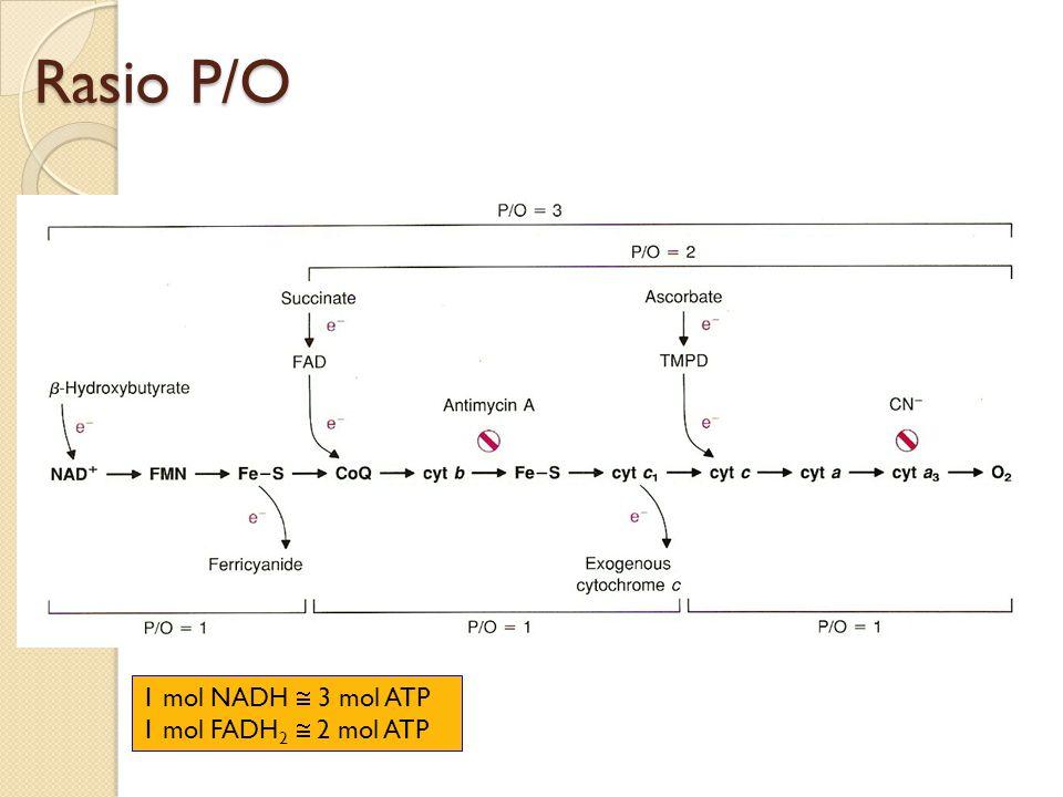 Rasio P/O 1 mol NADH  3 mol ATP 1 mol FADH2  2 mol ATP