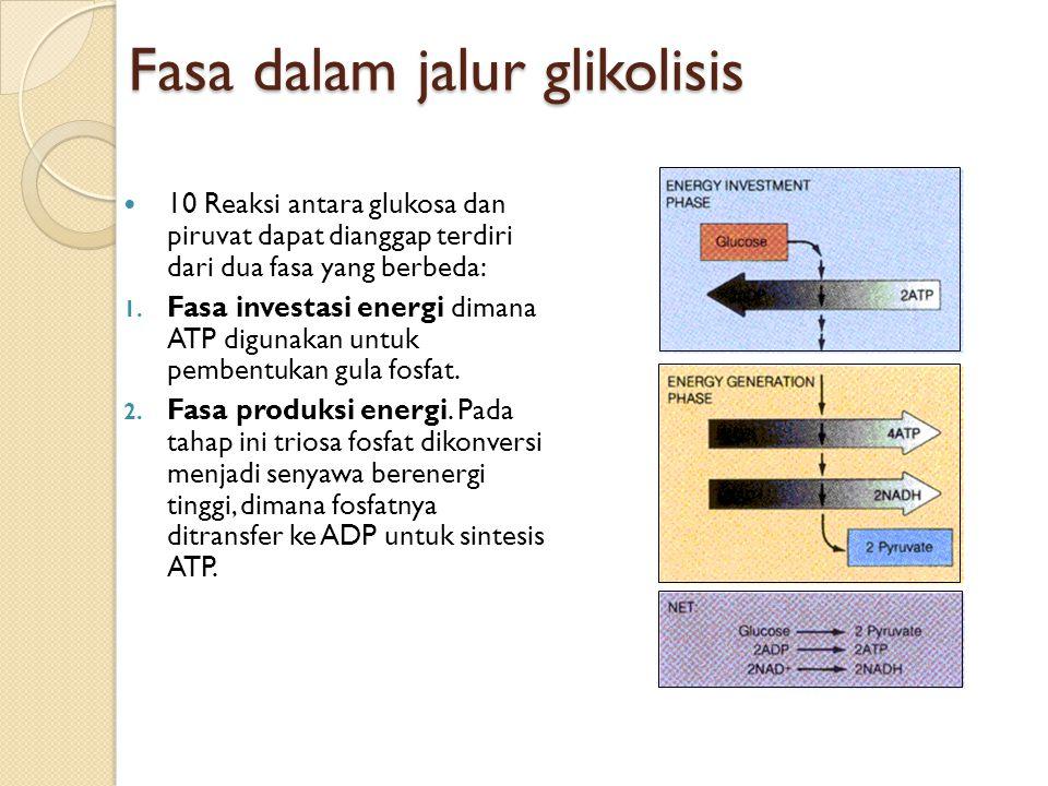Fasa dalam jalur glikolisis