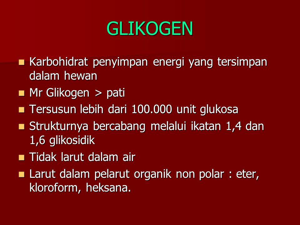 GLIKOGEN Karbohidrat penyimpan energi yang tersimpan dalam hewan