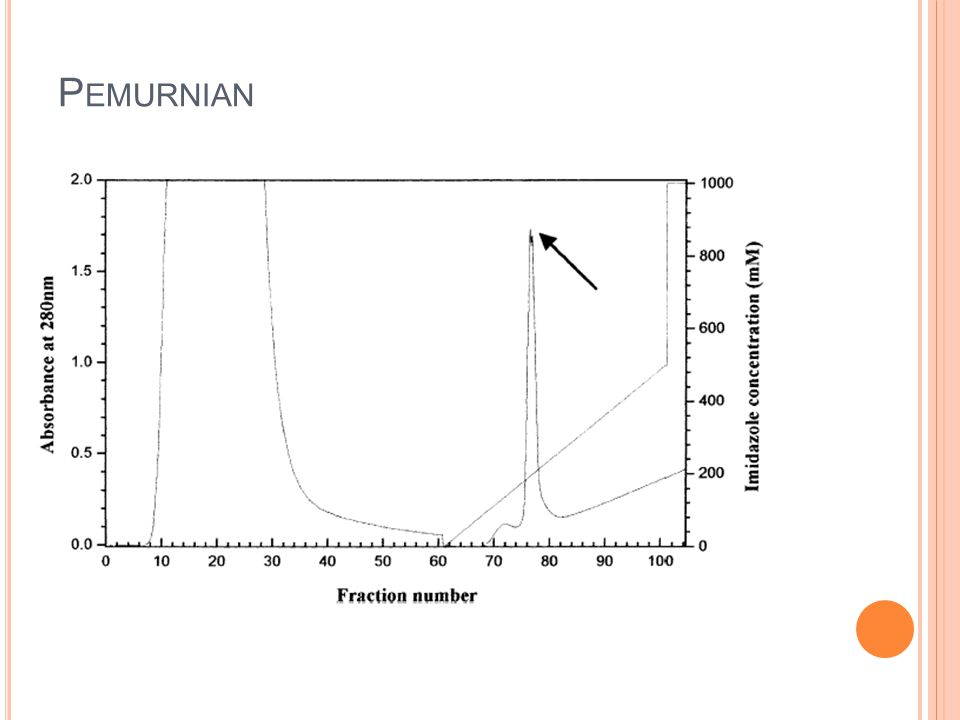 Pemurnian During a gradual increase in the imidazole concentration, a sharp protein peak was observed in the chromatogram (Figs. 2 and 3).