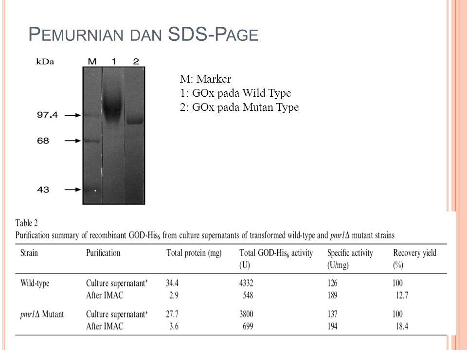 Pemurnian dan SDS-Page