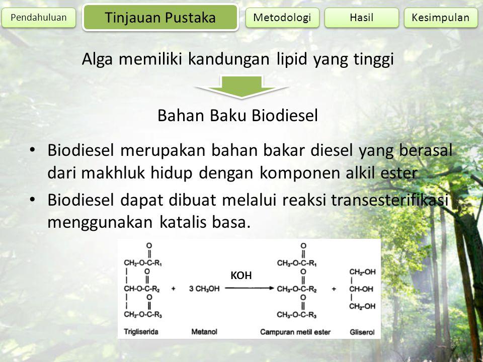 Alga memiliki kandungan lipid yang tinggi