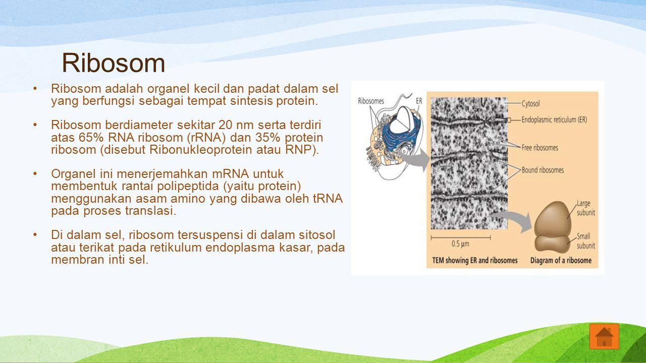 Ribosom Ribosom adalah organel kecil dan padat dalam sel yang berfungsi sebagai tempat sintesis protein.