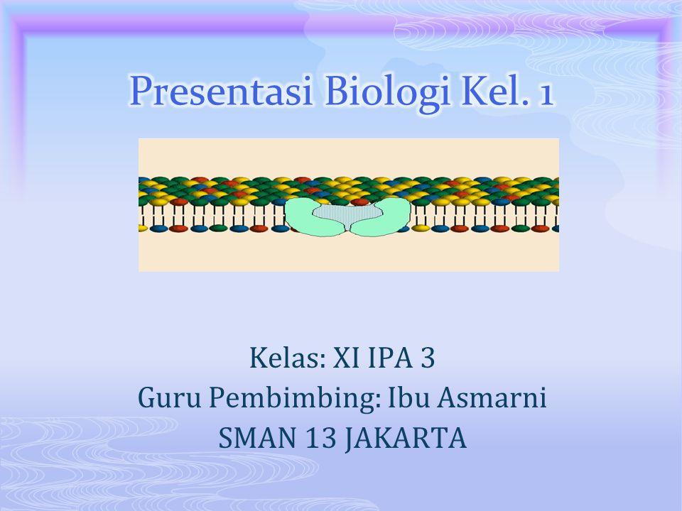 Presentasi Biologi Kel. 1