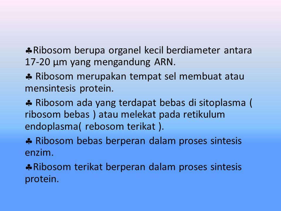 Ribosom berupa organel kecil berdiameter antara 17-20 µm yang mengandung ARN.
