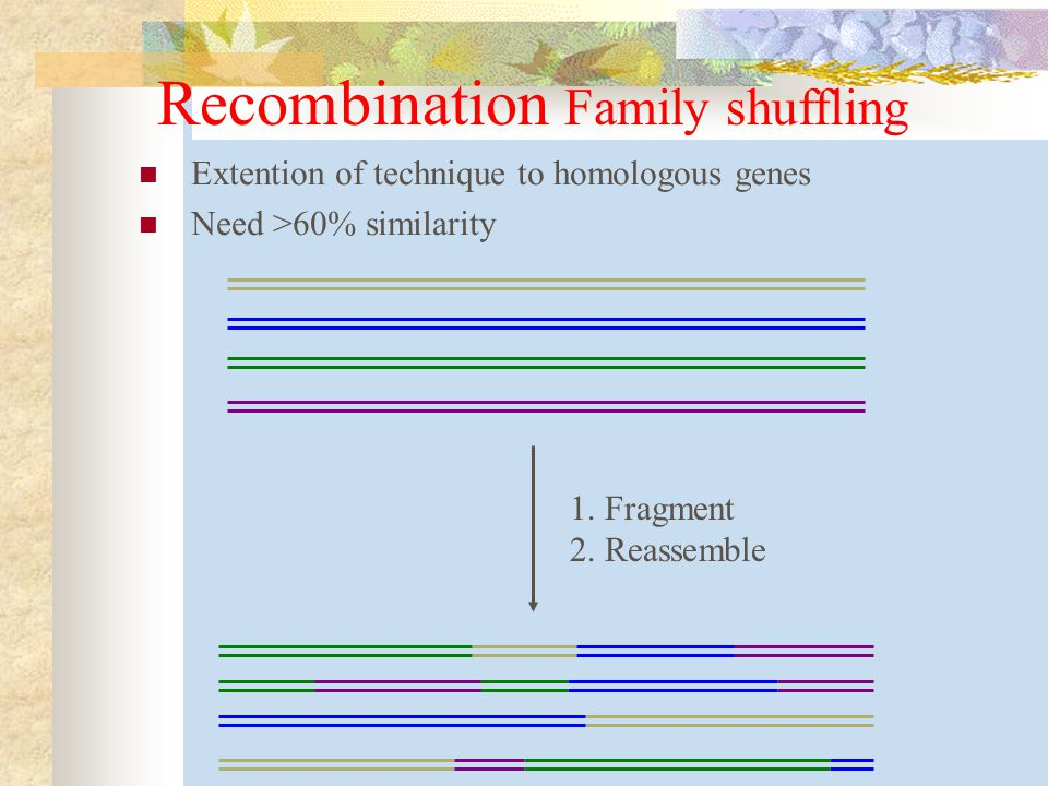 Recombination Family shuffling
