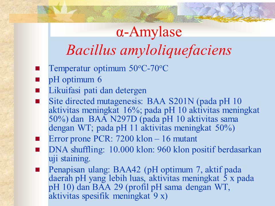 α-Amylase Bacillus amyloliquefaciens
