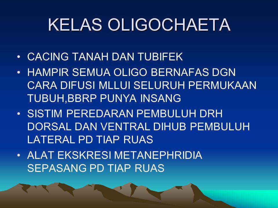 KELAS OLIGOCHAETA CACING TANAH DAN TUBIFEK