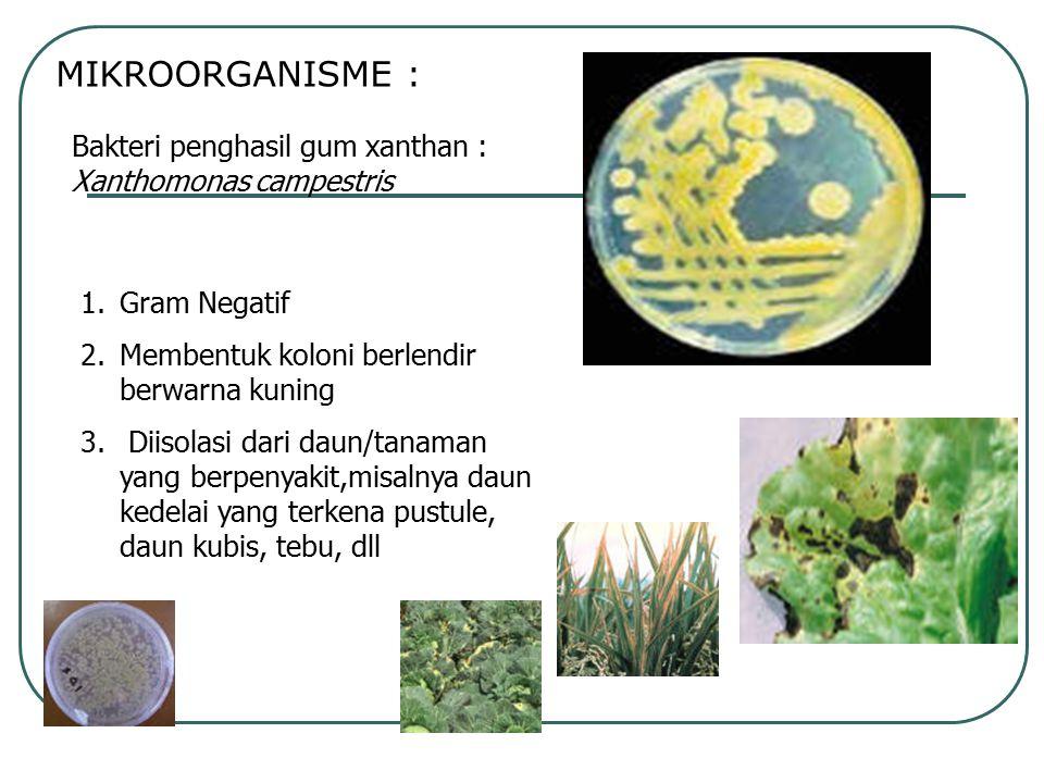 MIKROORGANISME : Bakteri penghasil gum xanthan : Xanthomonas campestris. Gram Negatif. Membentuk koloni berlendir berwarna kuning.