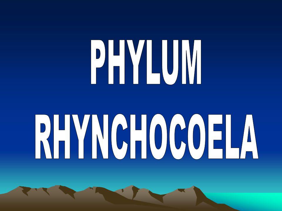 PHYLUM RHYNCHOCOELA