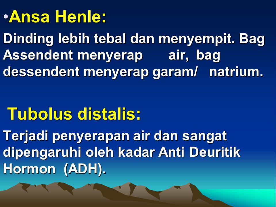 Ansa Henle: Tubolus distalis: